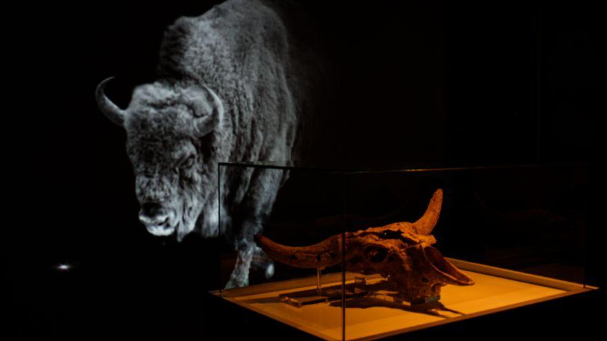 El bisonte que inspiró Altamira