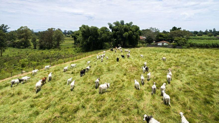 Siga la vaca: una ganadería diferente para lograr carne sostenible
